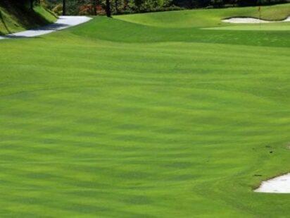 Golf in Green Cove